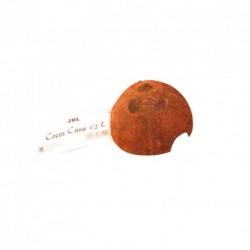 COCOS JAVA 1/2 L
